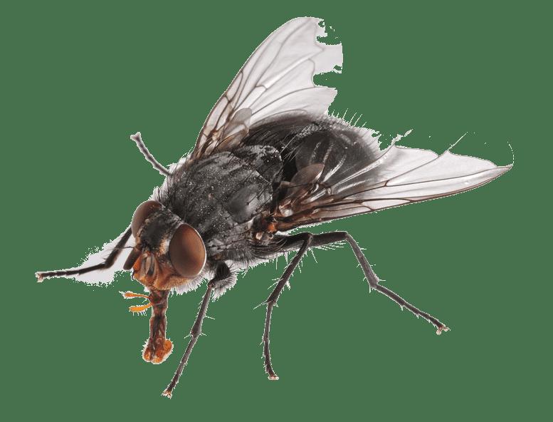 sinek-ilaclama